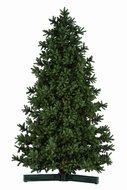 Kerstbomen vanaf 3 meter